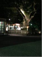熱田神宮 ひつまぶしやポケモンで有名という事で行ってきました